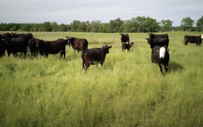 Cargill now sourcing beef from CRSB Certified farms and ranches across Canada